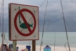 no tempting fish with hooks